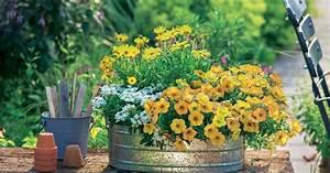 Blumenkästen Bepflanzen Ideen : balkon pflanz ideen mit petunien mein sch ner garten ~ Eleganceandgraceweddings.com Haus und Dekorationen