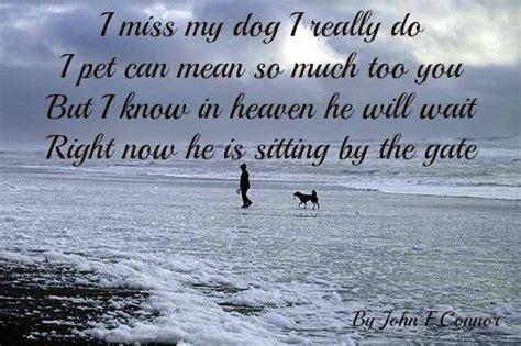 dog quotes quotesgram