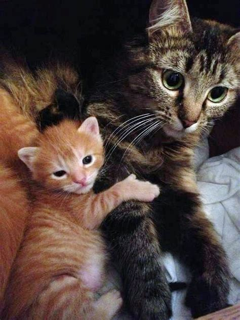 fluffy kittens await  homes  cats protection league tenerife news official website