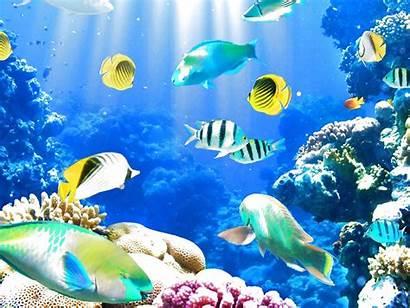 Fish Underwater Ocean Sea Fishes Sealife Nature