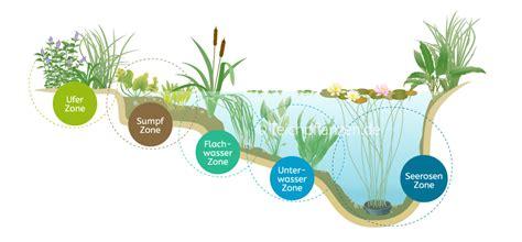 Teichpflanzen Fuer Verschiedene Wasserzonen by Shop F 252 R Teichpflanzen In G 228 Rtnerqualit 228 T