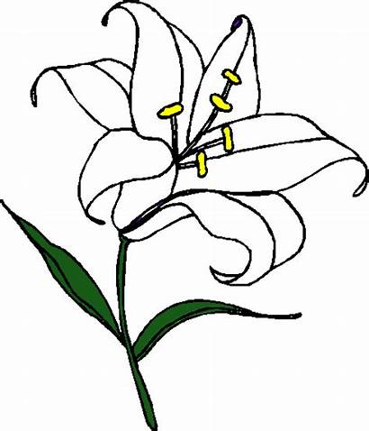 Lily Easter Clipart Flower Drawing Lilies Drawings