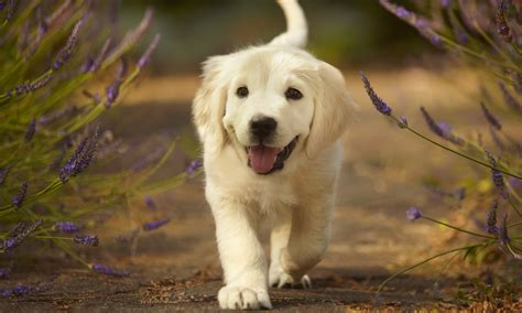 cutest dog breeds  adorable dogs