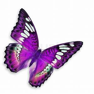Purple butterfly | Stock image | Colourbox