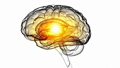 Brain Intelligence Psychology Theories Ai Neuroscience Pain