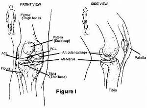 Diagram Of Torn Acl : anterior cruciate ligament acl injury or tear johns ~ A.2002-acura-tl-radio.info Haus und Dekorationen
