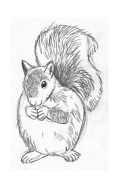 Animals Fur Drawing Animal Drawings Sketch Clipart
