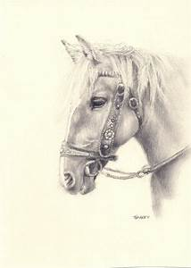 pencil drawing of a horse | Pencil drawings | Pinterest ...