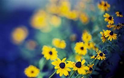 Yellow Flowers Flower Field Desktop 4k Wallpapers