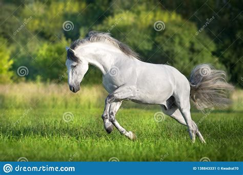 horse andalusian gallop preview