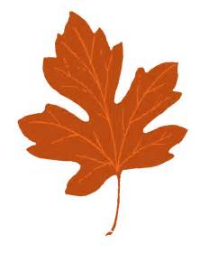 vintage fall clip maple leaves the graphics