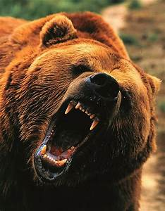 Putellaking: TOP 10 ANIMAL HORRORS