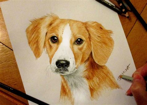 puppy portrait colored pencil drawing time lapse art
