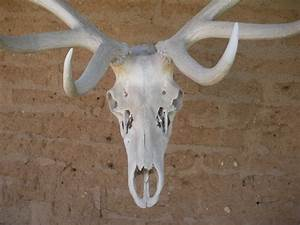 Sketches Of Deer Molly 39 S Art Blog Character Development So Far
