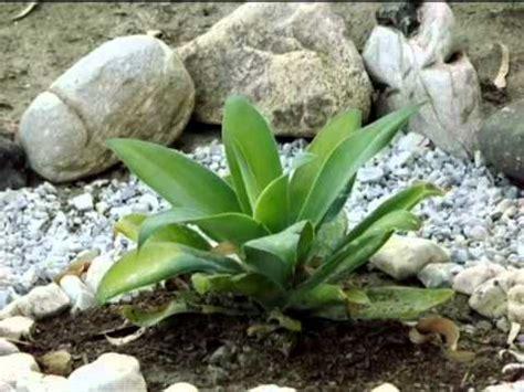 El Jardín De Cactus Youtube