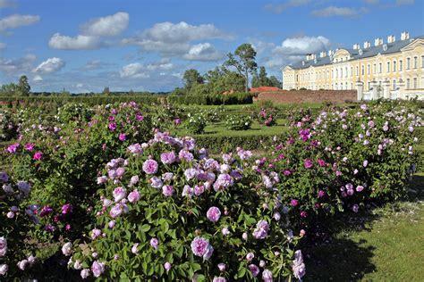 Rožu dārzs | Rose garden