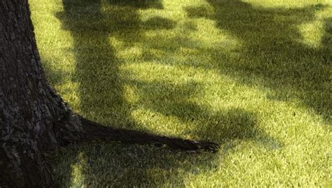 Grow Grass In The Shade