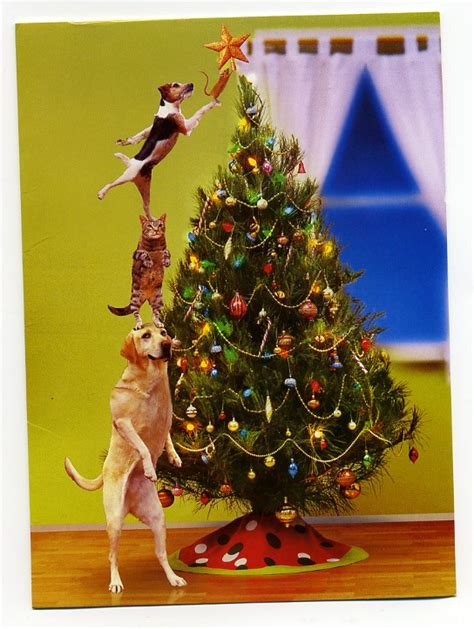 pet proof your christmas tree