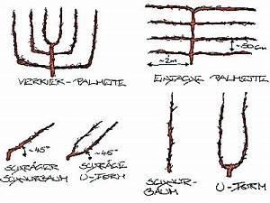Wann Apfelbaum Pflanzen : s ulenapfel birne und co pflegen schneiden veredeln ~ Lizthompson.info Haus und Dekorationen