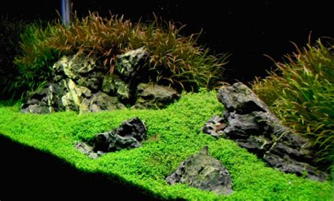 How To Make Aquascape by How To Create Aquascape With Iwagumi Style Aquascaper