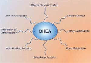 Dhea  U2013 Does It Have Any Beneficial Non