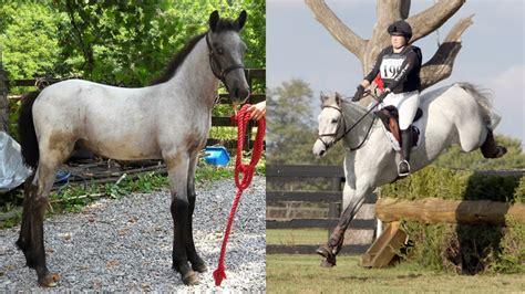 chronicle   horse