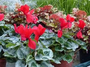Plante Fleurie Intérieur : plantes fleuries et vertes schwarz ~ Premium-room.com Idées de Décoration