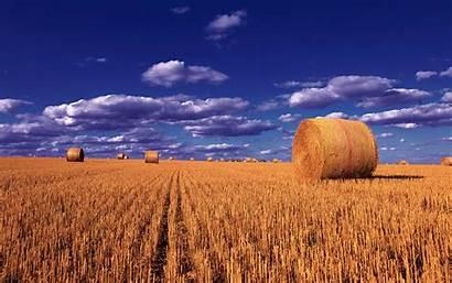 Desktop Laptop Wheat Field Montana Sky Balls