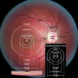 What Is Foveal Vision