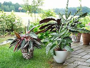 Gut Riechende Zimmerpflanzen : verstaubte zimmerpflanzen reinigen regen ist gut f r alle pflanzen ~ Markanthonyermac.com Haus und Dekorationen