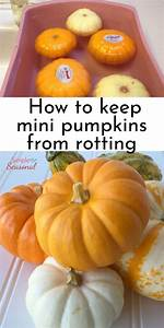 Preserve, Your, Mini, Pumpkins, And, Gourds, So, They, Last, All, Season, No, More, Rotting, Mini, Pumpkins, In