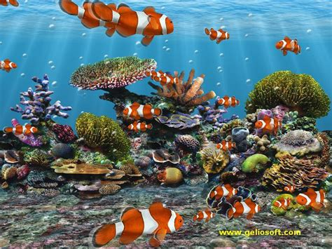 Fish Animation Wallpaper Free - free animated fish aquarium wallpaper wallpapersafari