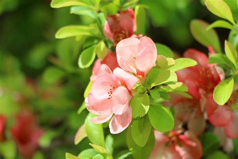 flowers to plant in april spring flowers to plant in april flowers ideas