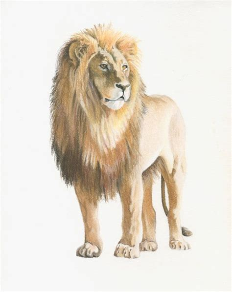 lion drawing ideas  pinterest lion art