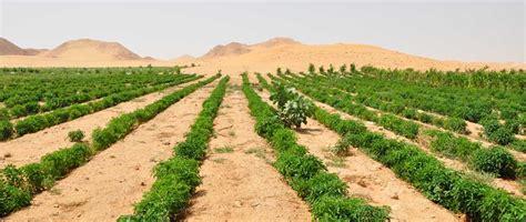agriculture  commerce   persian gulf farmfolio