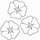 Poppy Coloring Template Printable Flowers Sheets Flower Poppies Remembrance Colouring Bigactivities Sheet Activities Copyright Drawing Many Adult Google Anzac Getdrawings sketch template