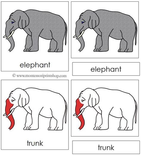 elephant nomenclature cards red  parts