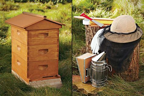 Backyard Bee Hive