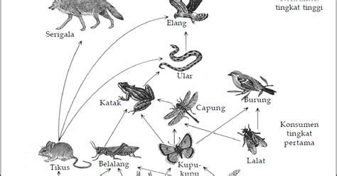 contoh ekosistem jaring jaring makanan simak gambar berikut