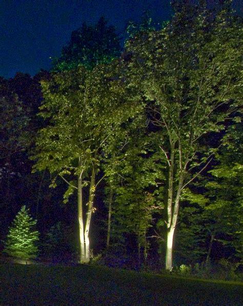 tree lighting outdoor lighting  chicago il outdoor