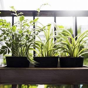 Was Können Sie Tun Um Die Umwelt Zu Schonen : was sie im sommer f r ihre balkonpflanzen tun k nnen ~ Watch28wear.com Haus und Dekorationen