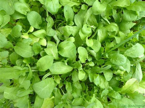 bett das mitwächst salat pflanzen balkon salat pflanzen die wichtigsten tipps um salat selber salat pflanzen
