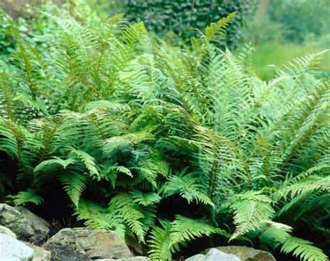 Welche Pflanzen Eignen Sich