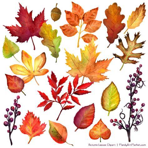 watercolor leaves clipart  fall mandy art market