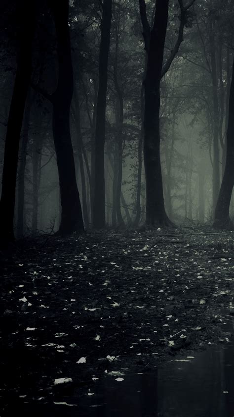 ultra hd dark forest wallpaper   mobile phone