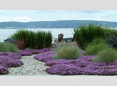 Ground cover ideas landscape beach style with mass
