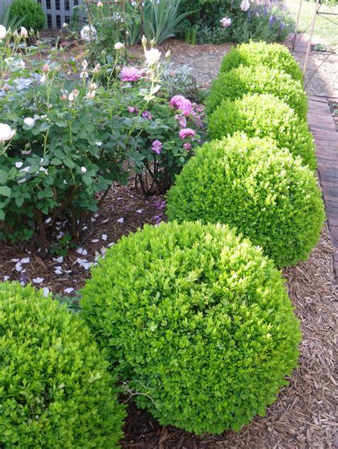 Gartengestaltung Mit Buchsbaum by The 25 Best Boxwood Ideas On