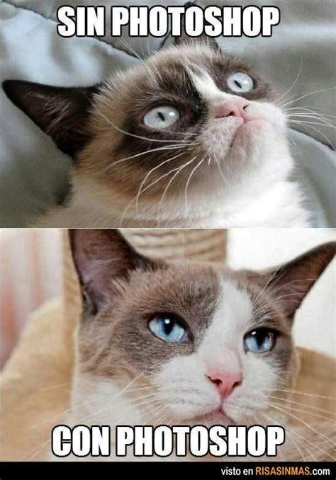 Memes De Gatos - memes de gatos 1 xd meme amino