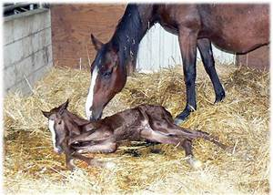 It's A Boy, Baby Colt Born! | Central California SPCA ...