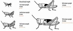 Australian Plague Locust Landholder Control Strategies For Nsw